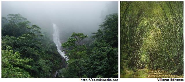 gobernanza forestal andina