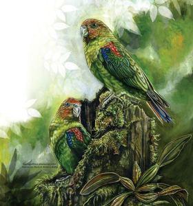 loro-multicolor-ave-emblema-de-caldas