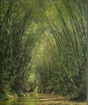 a4354-bambusa-guadua-villegas-editores