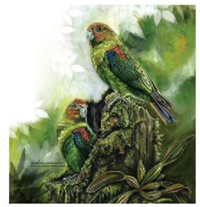 Loro multicolor, ave emblema de Caldas - ornitologiacaldas.org